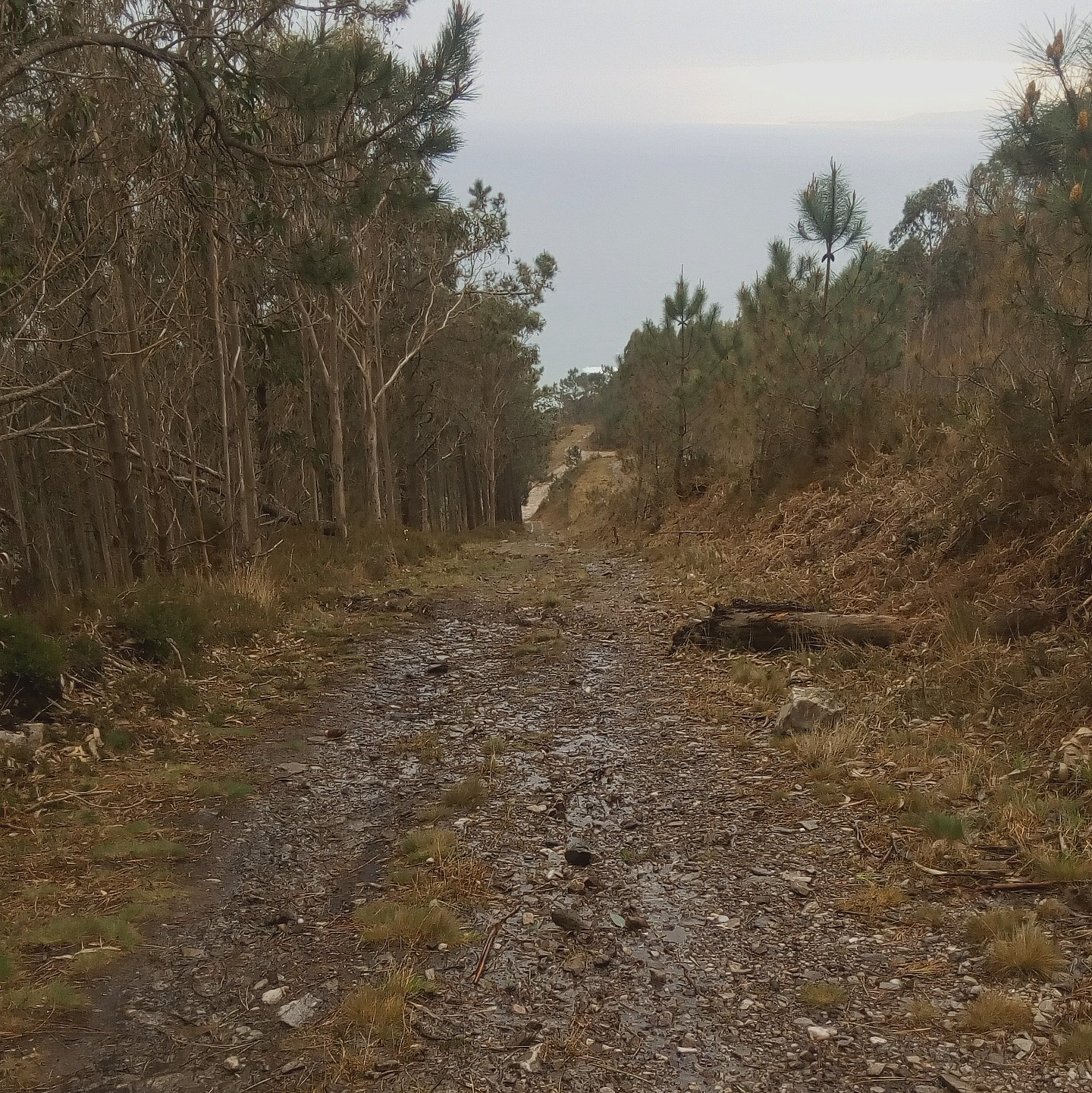 imaxe dun camiño de monte con pedra rota