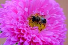 imaxe da abella